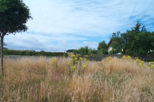 Zülpich - Niederelvenich Bauland für Bungalow